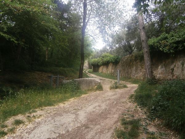 Wood Path Verona