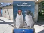 Penguin Sammy