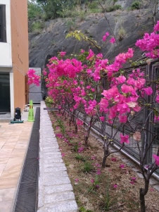 Lovely flowers at the back of the building leading to the hill